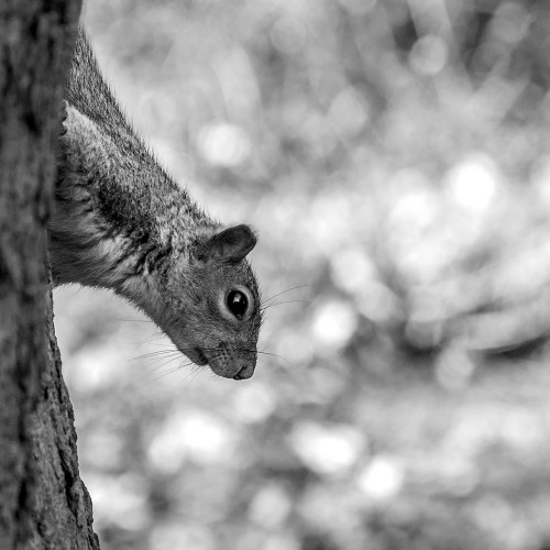 Nosey Squirrel