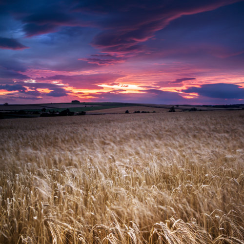final-wheat-fields-post