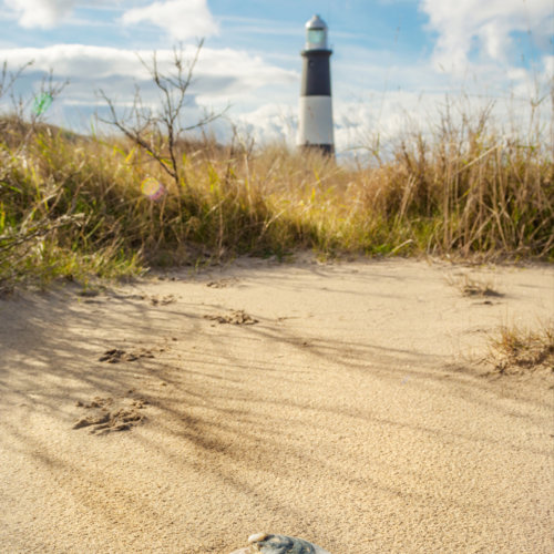 shell-lighthouse-web